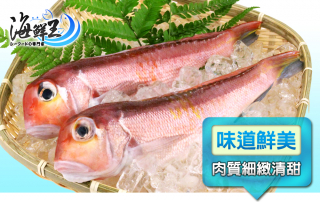 野生鮮嫩特選馬頭魚